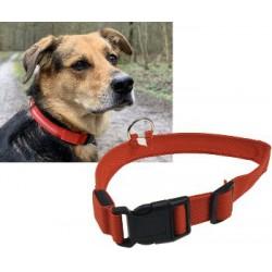 Hunde-Halsband leuchtend...